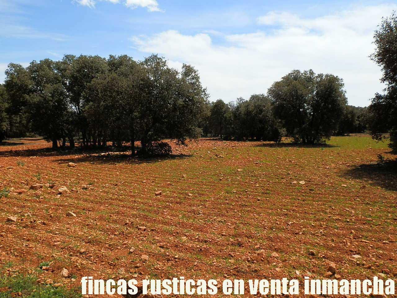 371_fincas-en-venta-10
