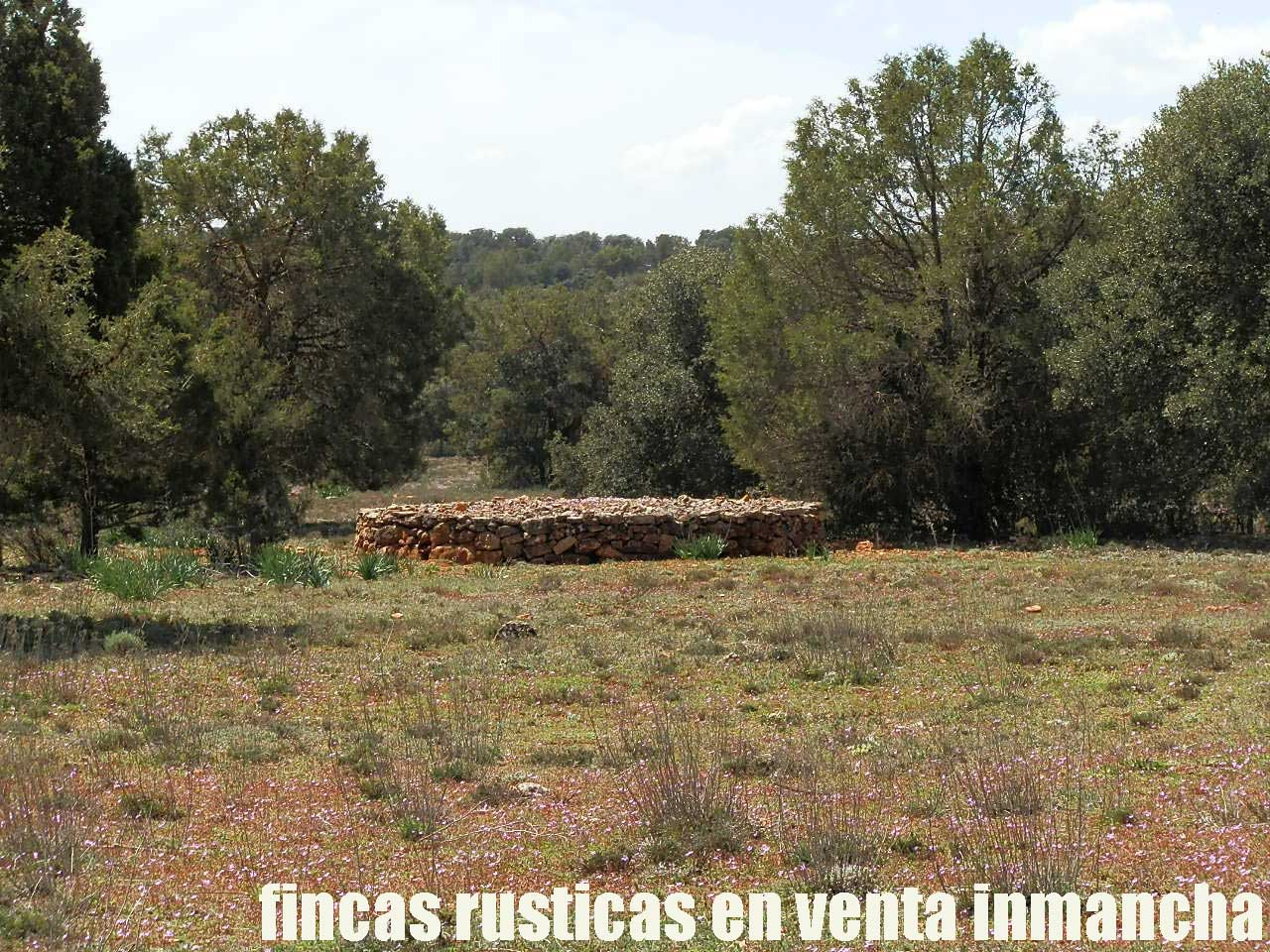 371_fincas-en-venta-12