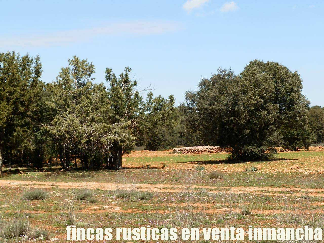 371_fincas-en-venta-13
