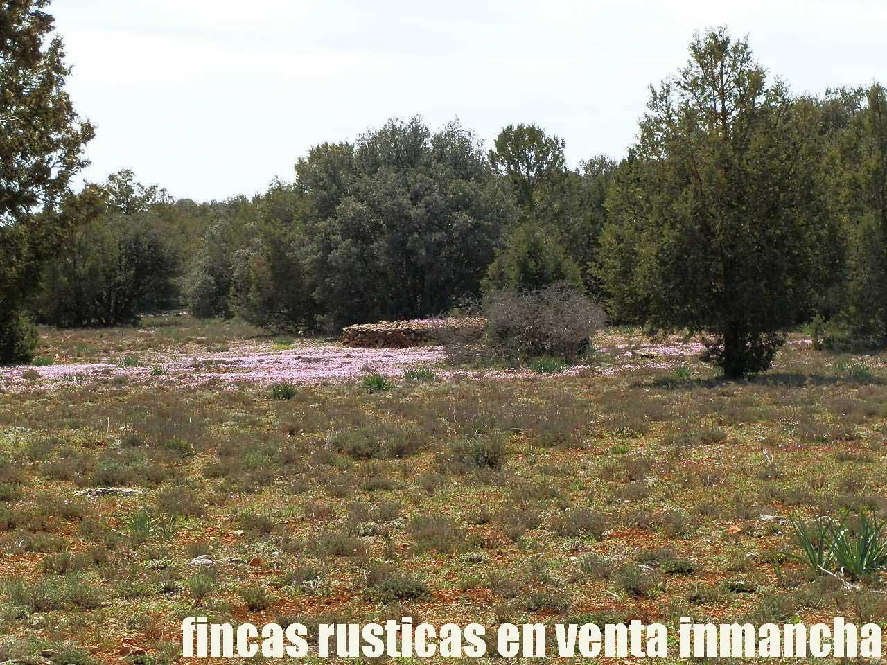 371_fincas-en-venta-14