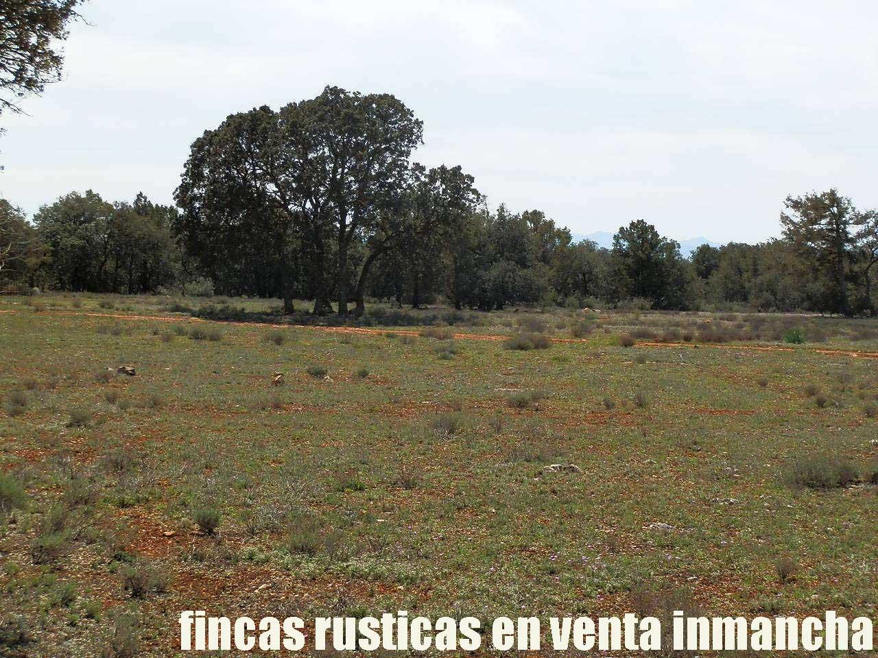 371_fincas-en-venta-3
