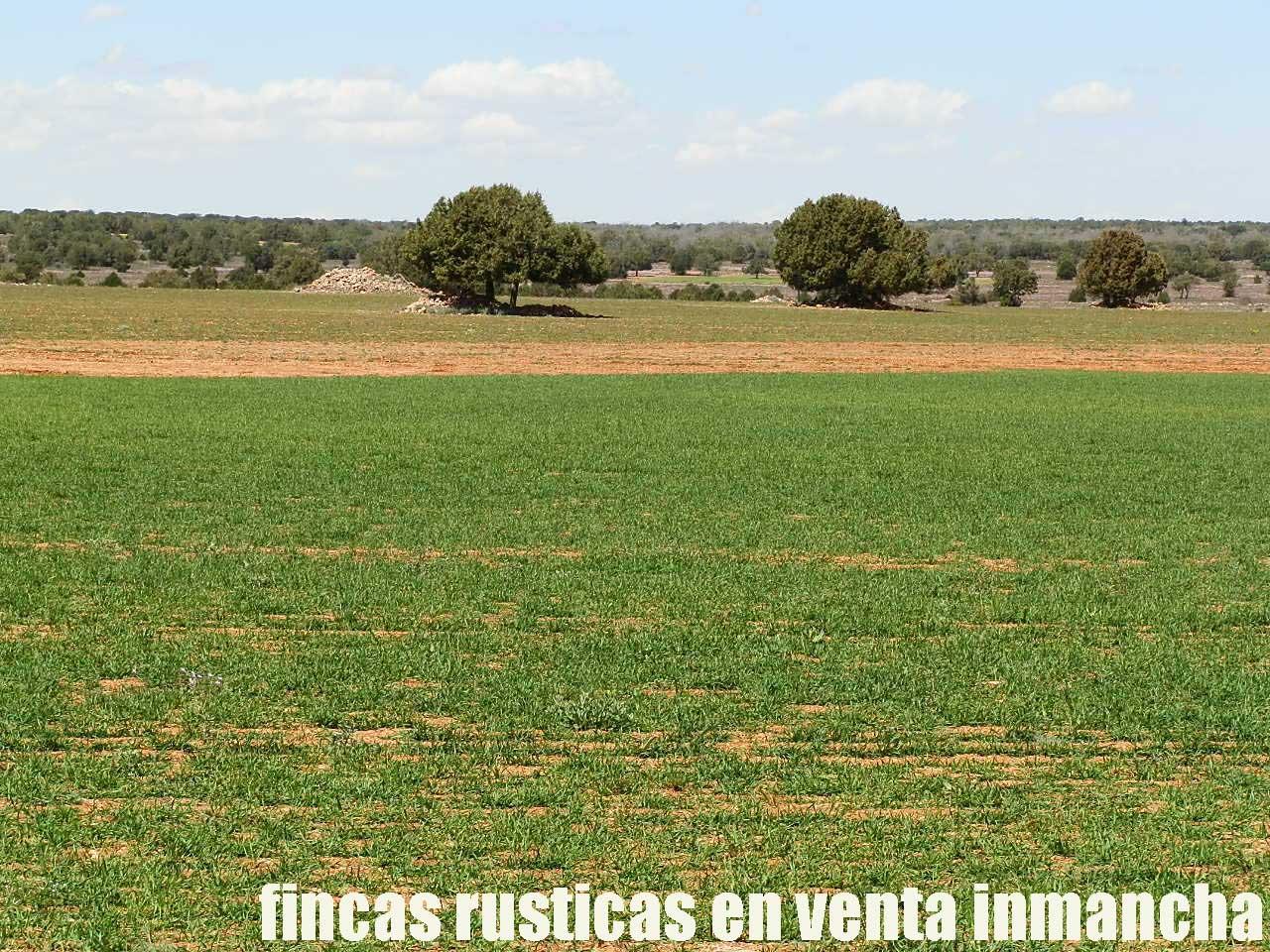 371_fincas-en-venta-31