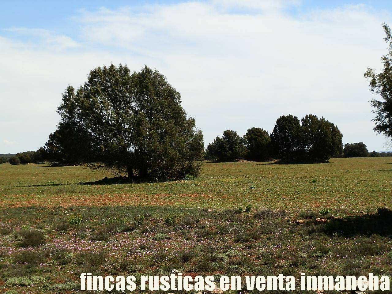 371_fincas-en-venta-32