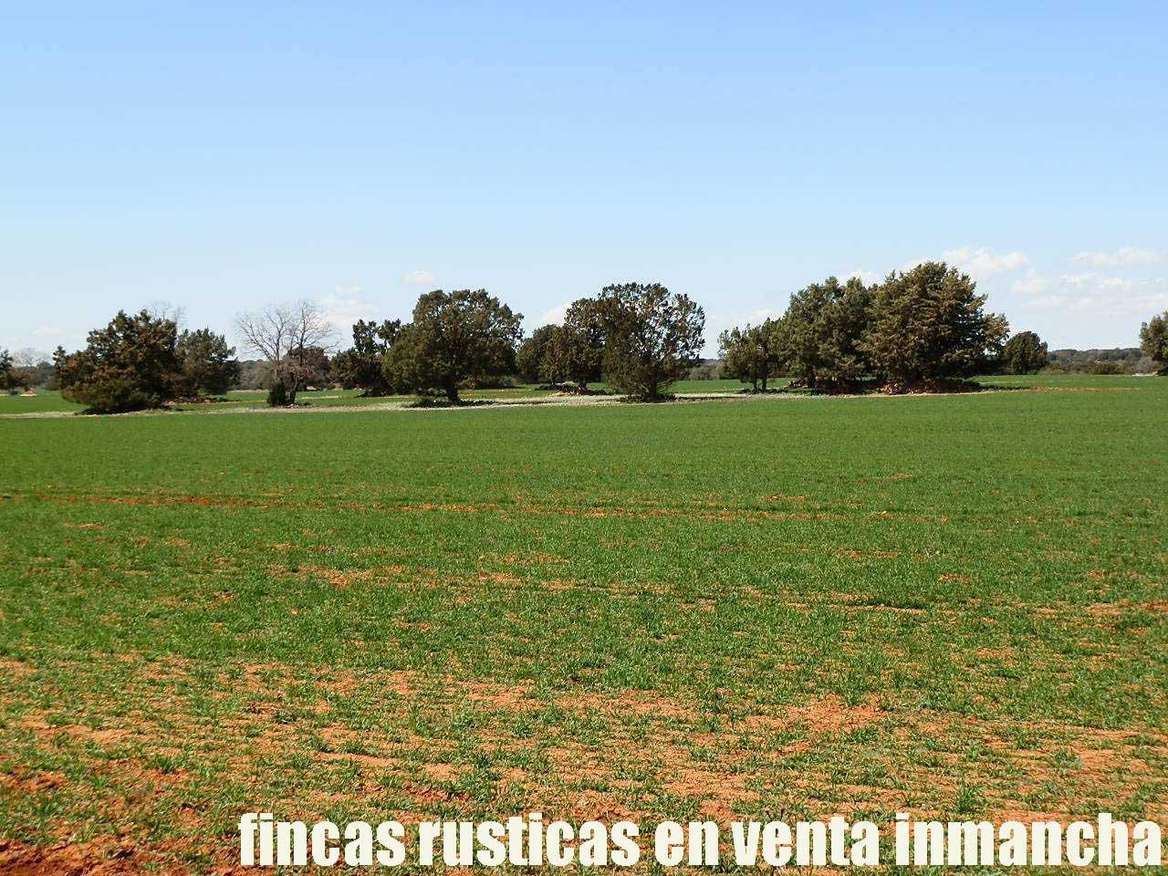 371_fincas-en-venta-38
