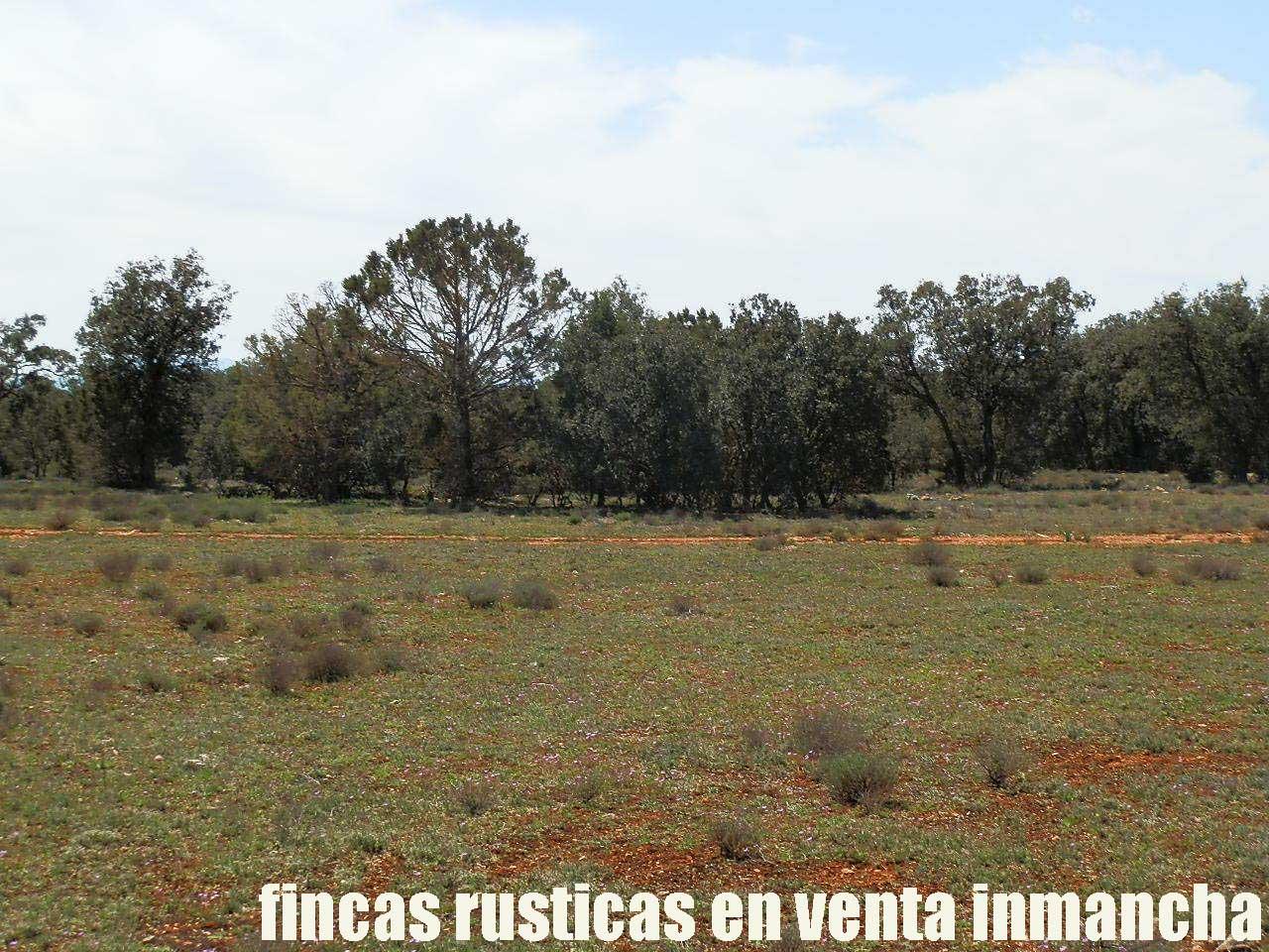 371_fincas-en-venta-4