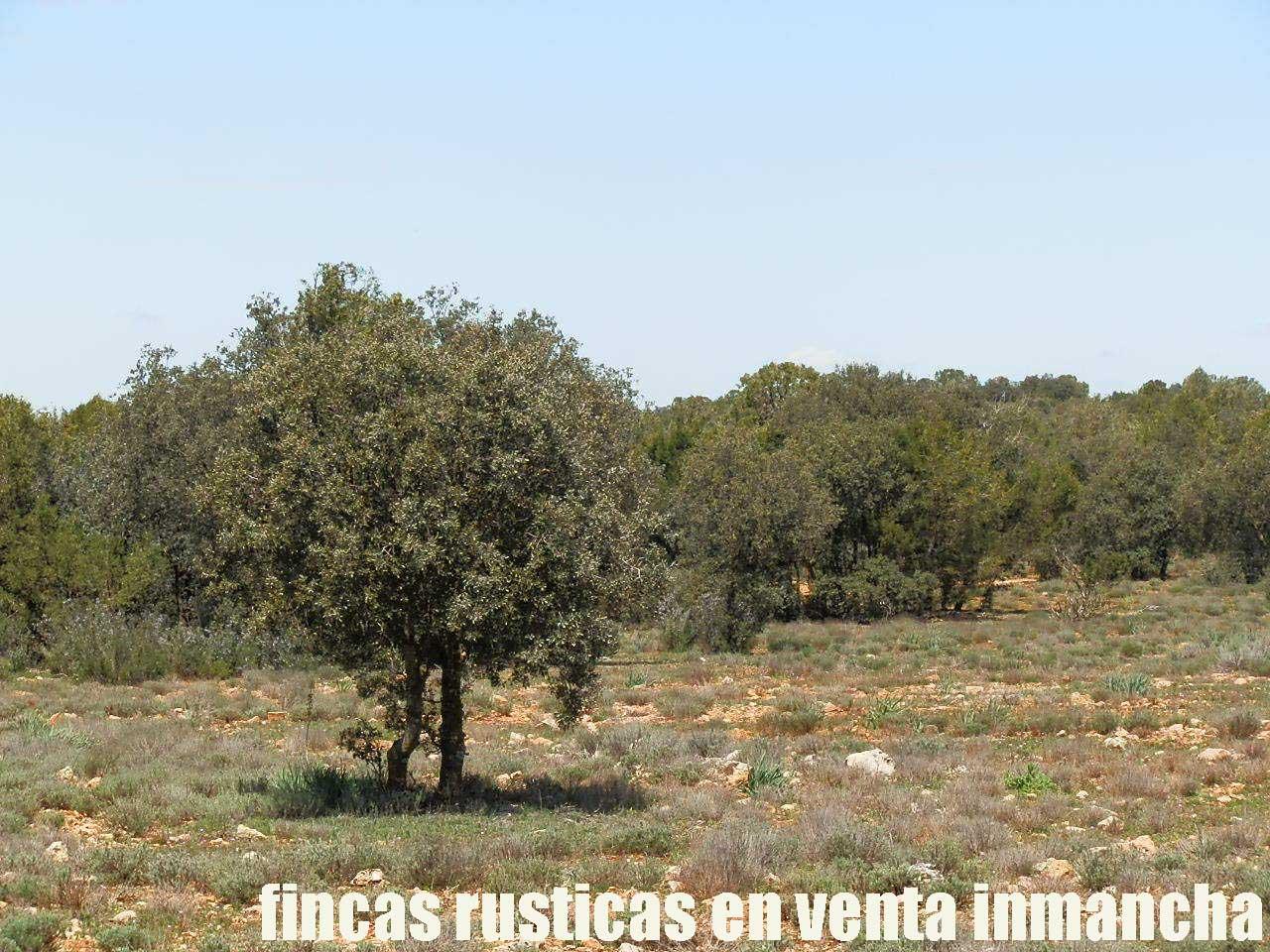 371_fincas-en-venta-5