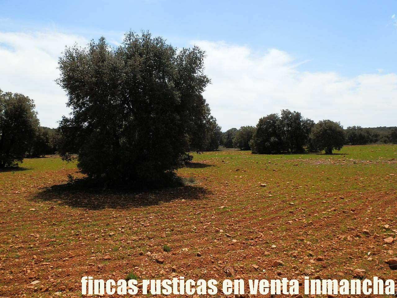 371_fincas-en-venta-9