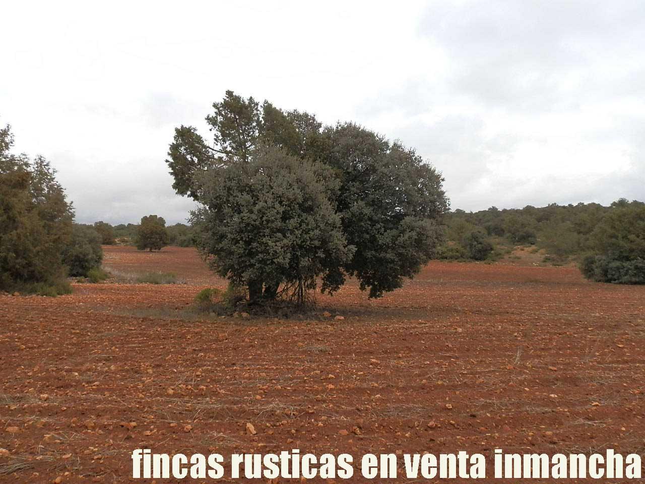 387_fincas-en-venta-021