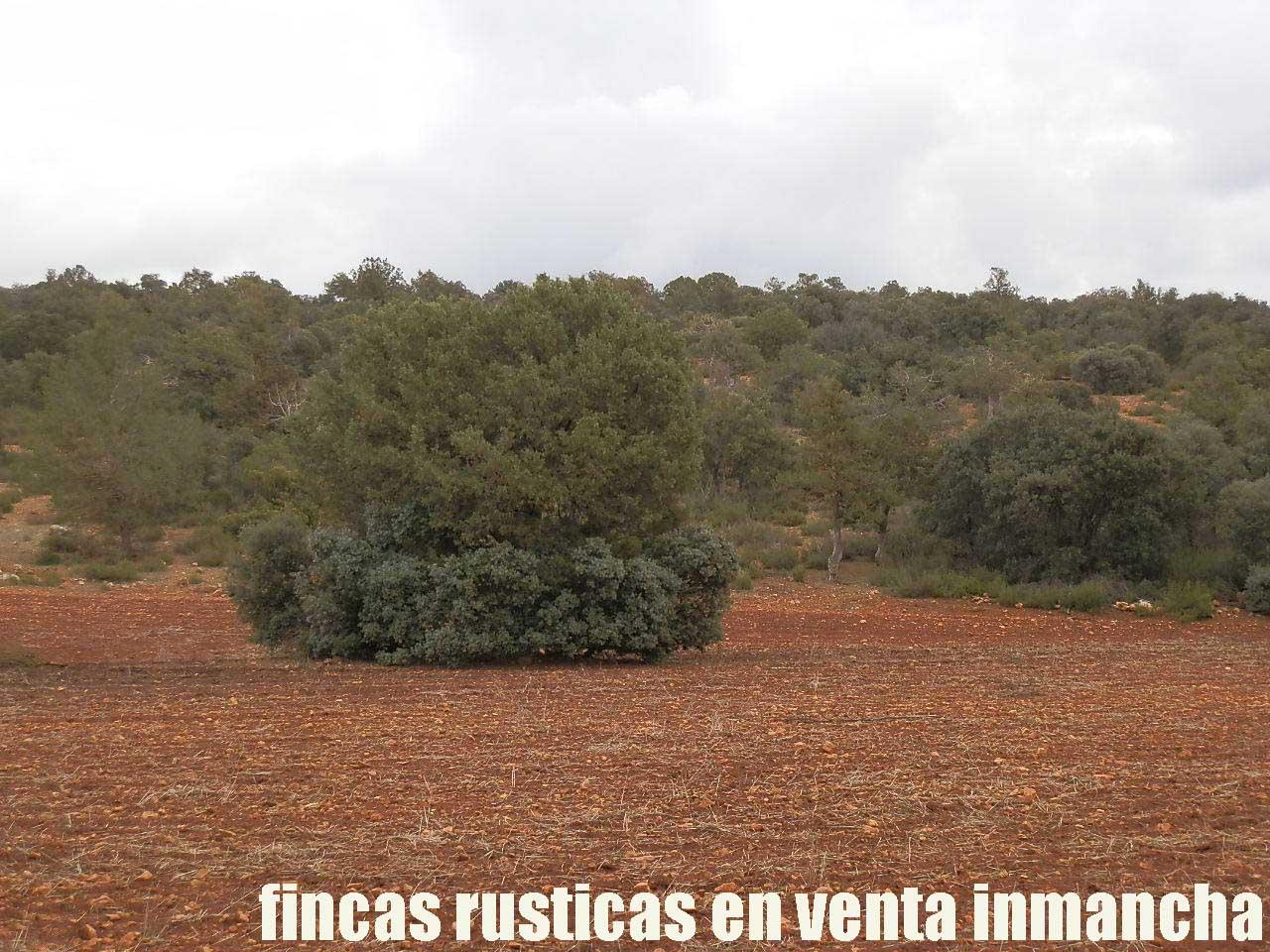 387_fincas-en-venta-023