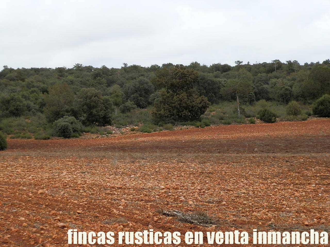 387_fincas-en-venta-024