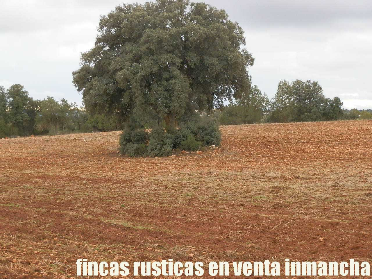 387_fincas-en-venta-029
