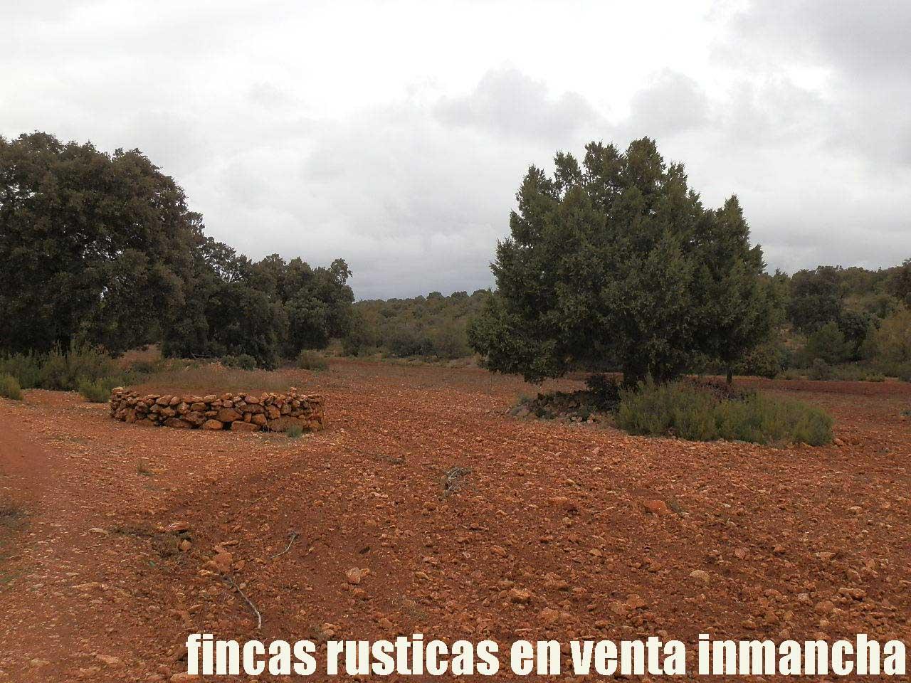 387_fincas-en-venta-040