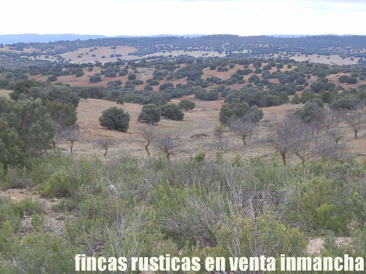 387_fincas-en-venta-085