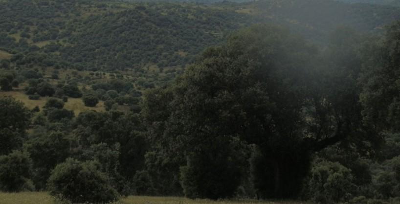 FINCA EN VENTA DE 47 HAS. GANADERA-RECREO EN TOLEDO 125 KM. DE MADRID