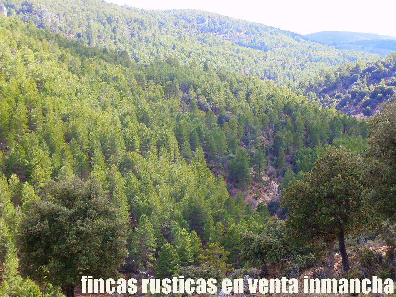 428_fincas-en-venta-32