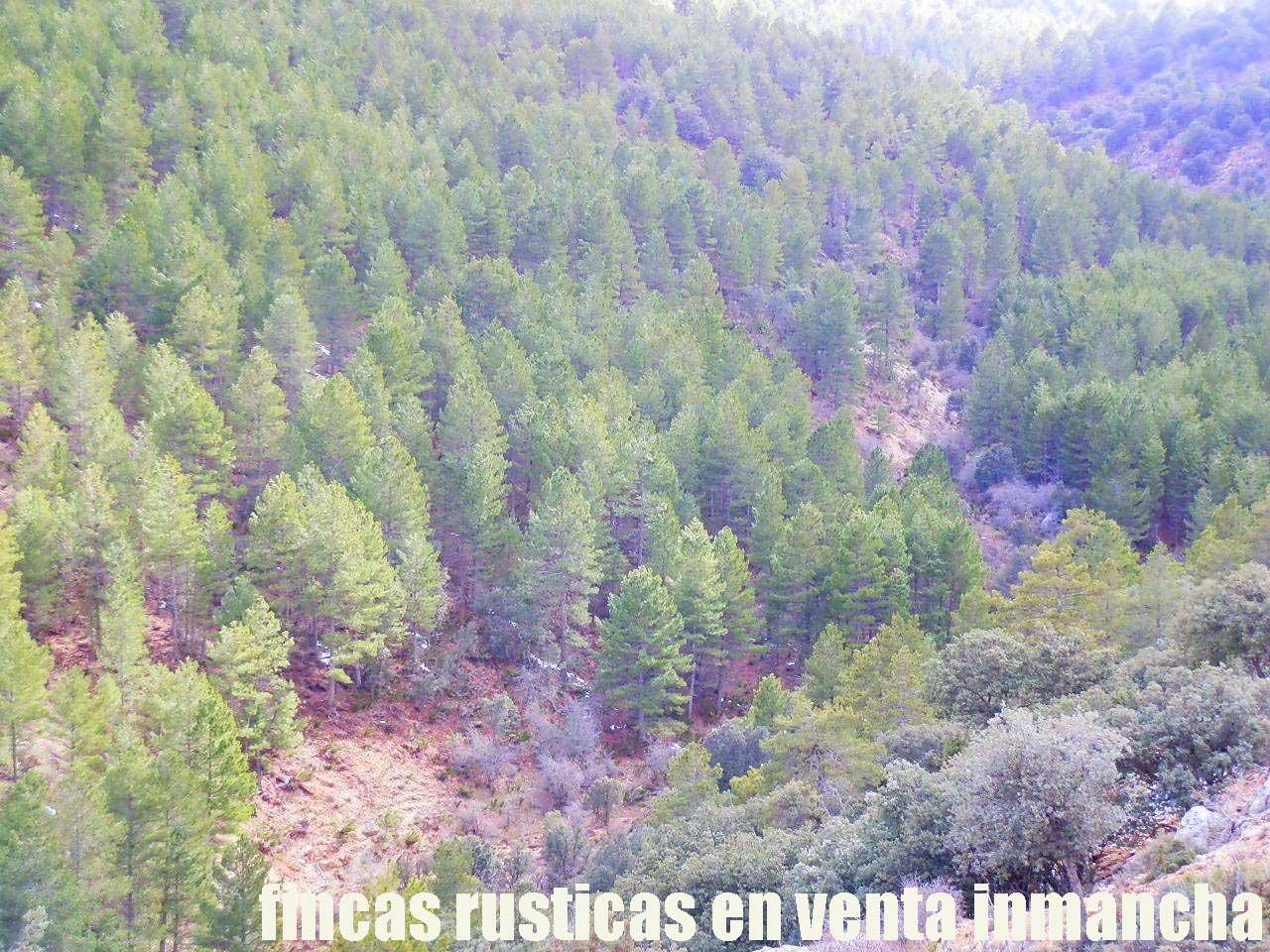 428_fincas-en-venta-33