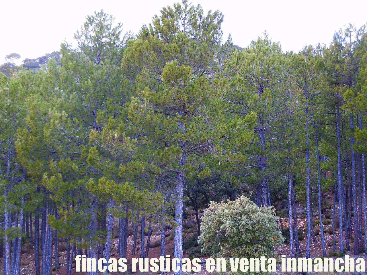 428_fincas-en-venta-39