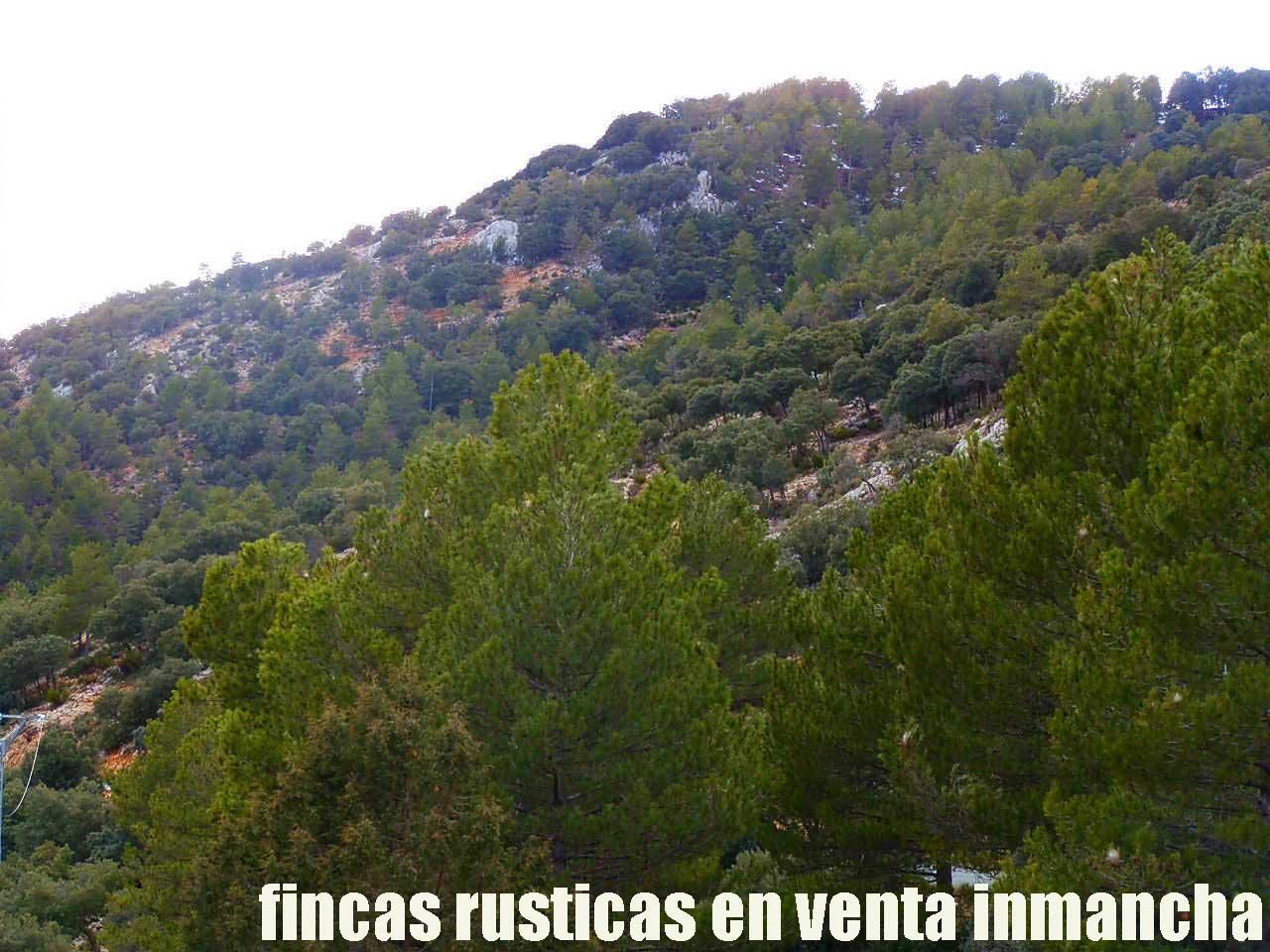 428_fincas-en-venta-40
