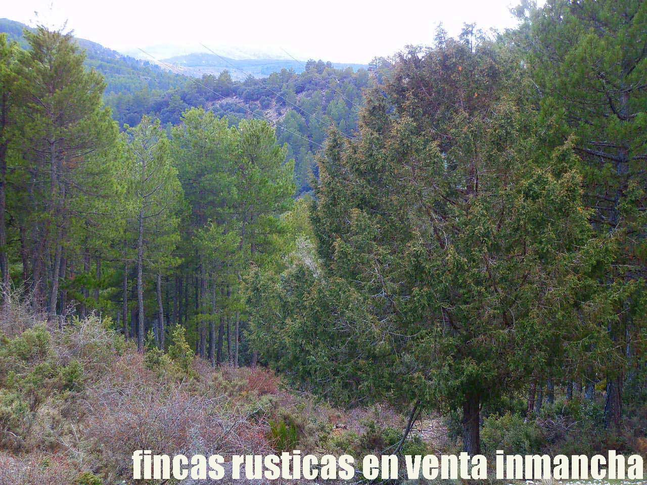 428_fincas-en-venta-42