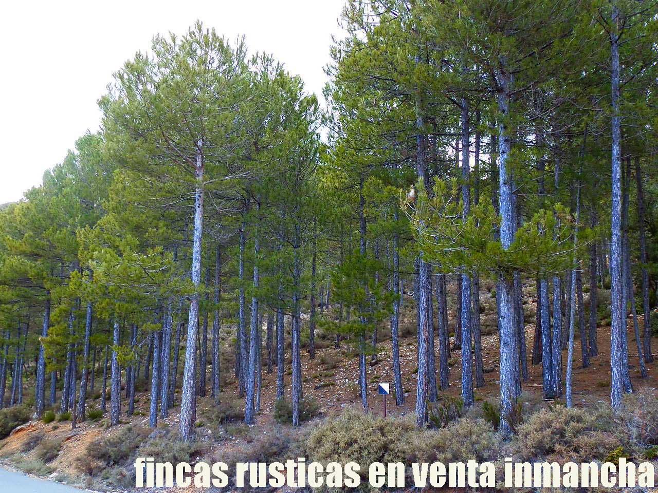428_fincas-en-venta-44