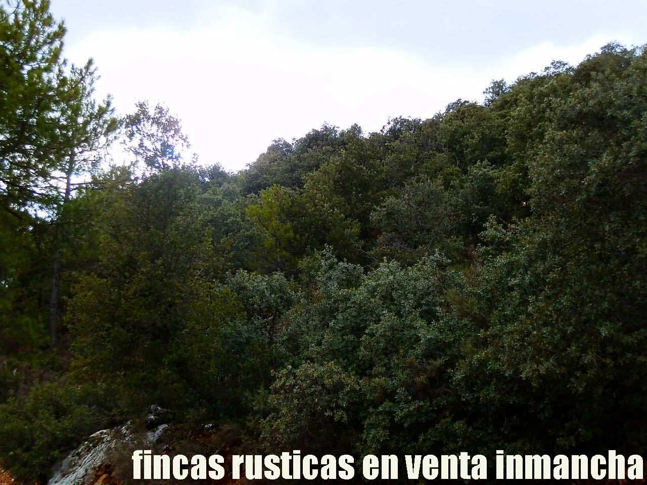 428_fincas-en-venta-45