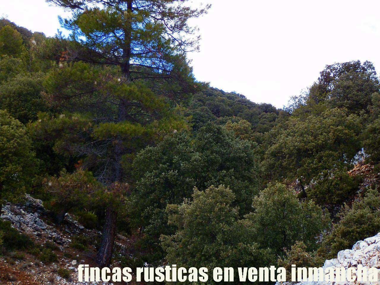 428_fincas-en-venta-50