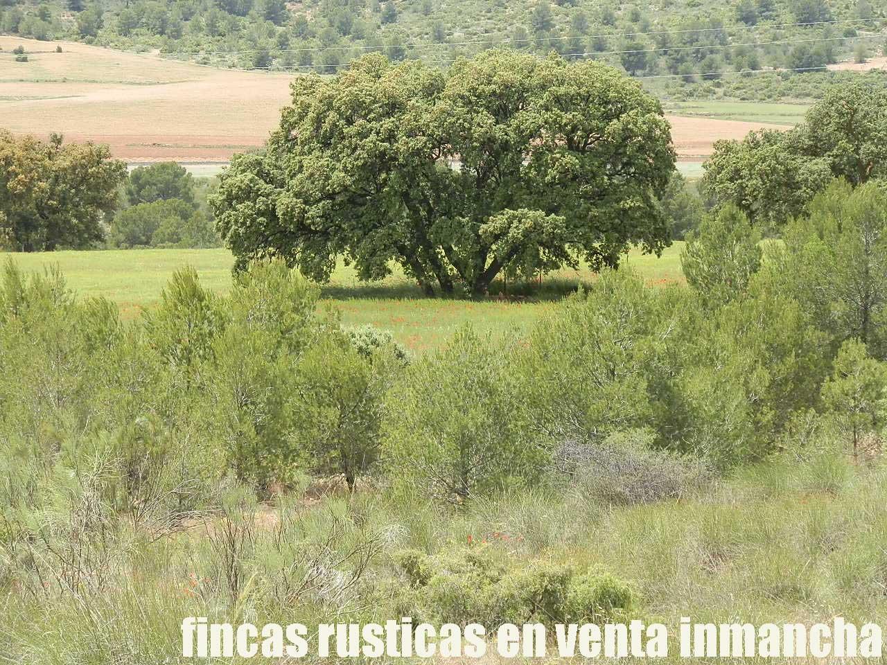 429_fincas-en-venta-35