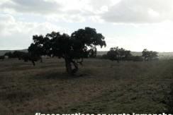 447_fincas-en-venta-10
