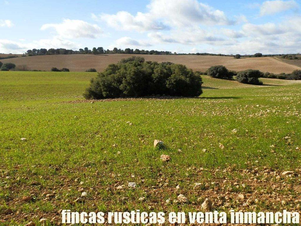 459_fincas-en-venta-022
