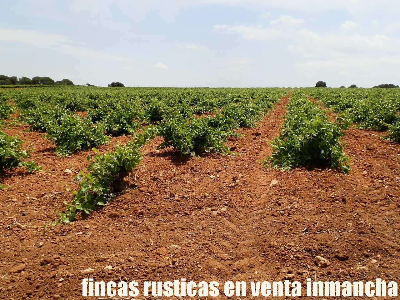 461_fincas-en-venta-001