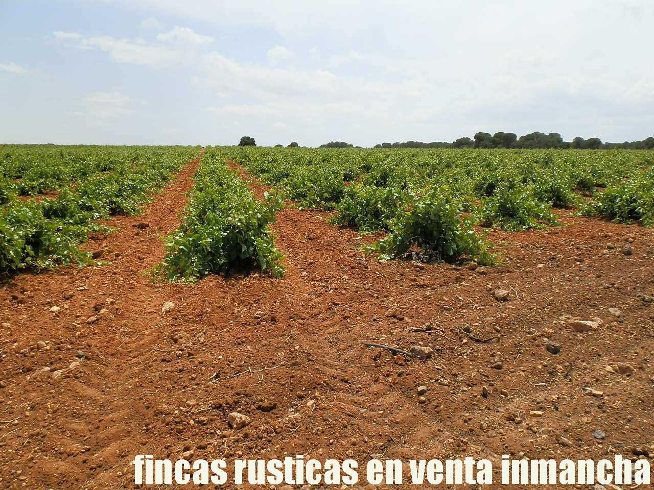 461_fincas-en-venta-002