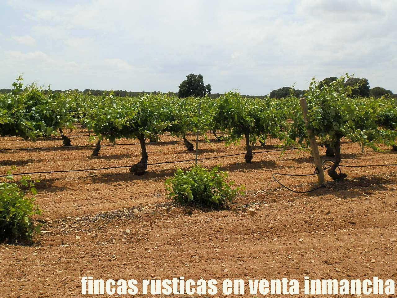 461_fincas-en-venta-009