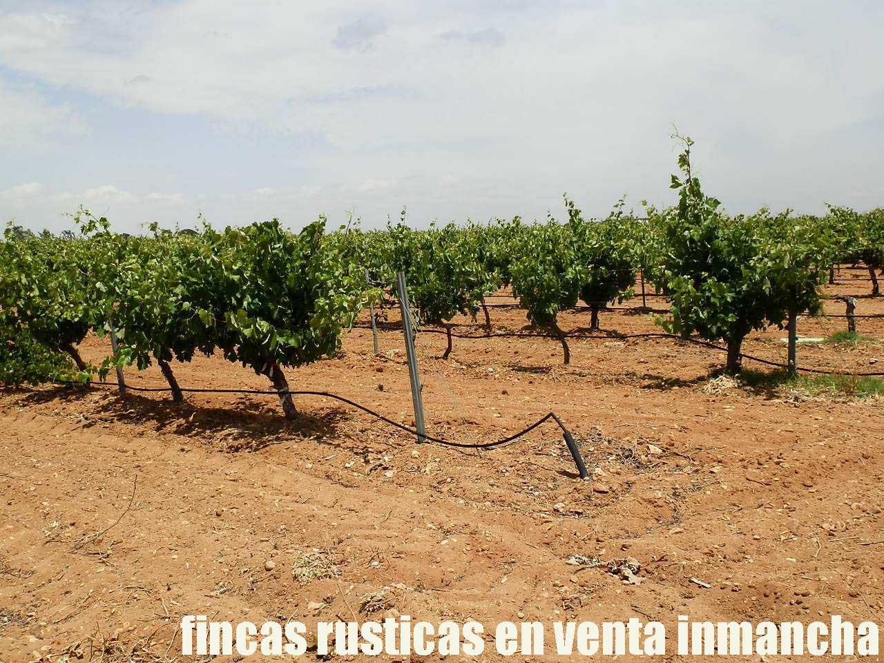 461_fincas-en-venta-011