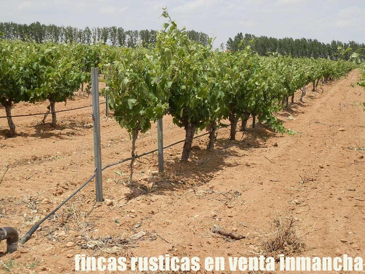 461_fincas-en-venta-012