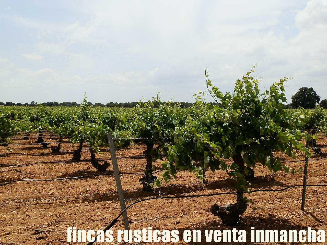 461_fincas-en-venta-013