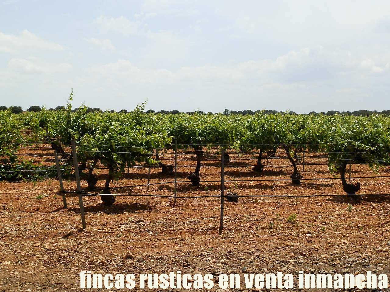461_fincas-en-venta-017
