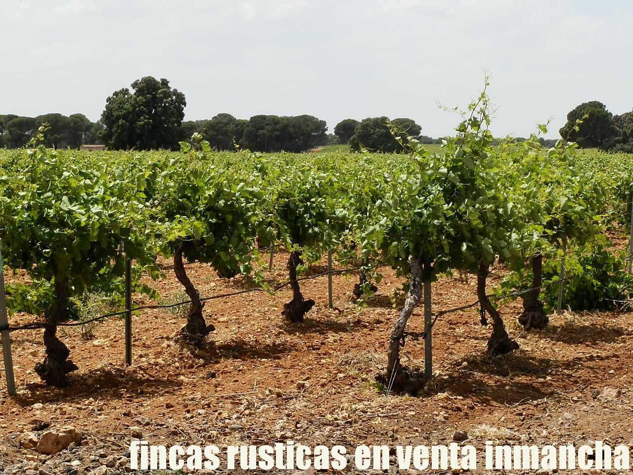 461_fincas-en-venta-019