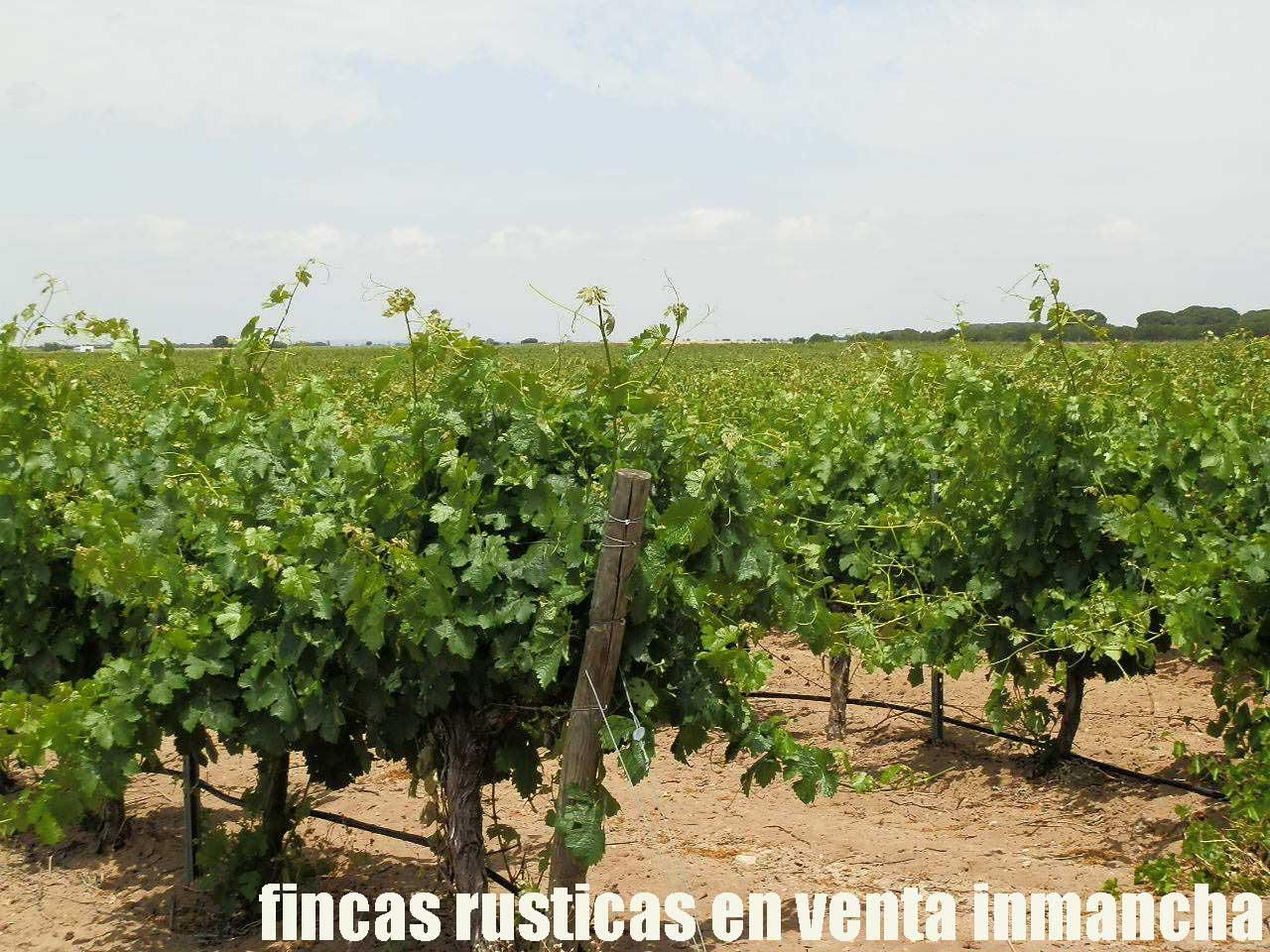 461_fincas-en-venta-024