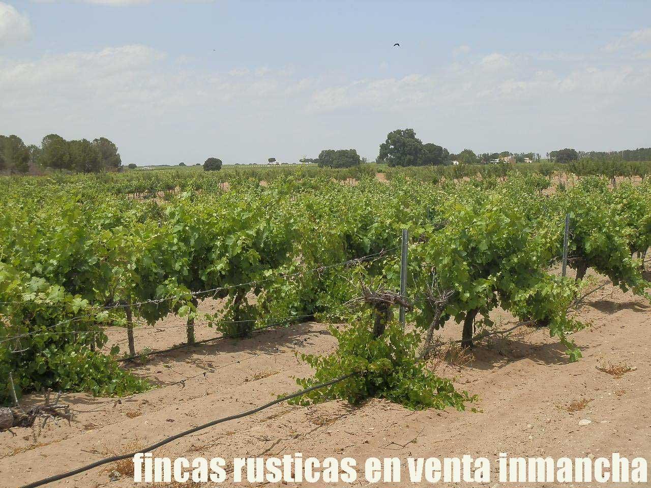 461_fincas-en-venta-025