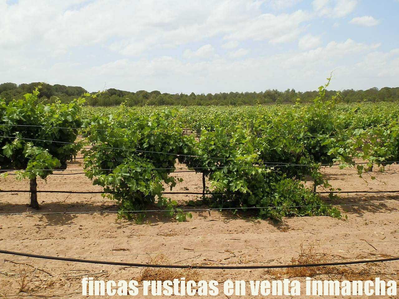 461_fincas-en-venta-026