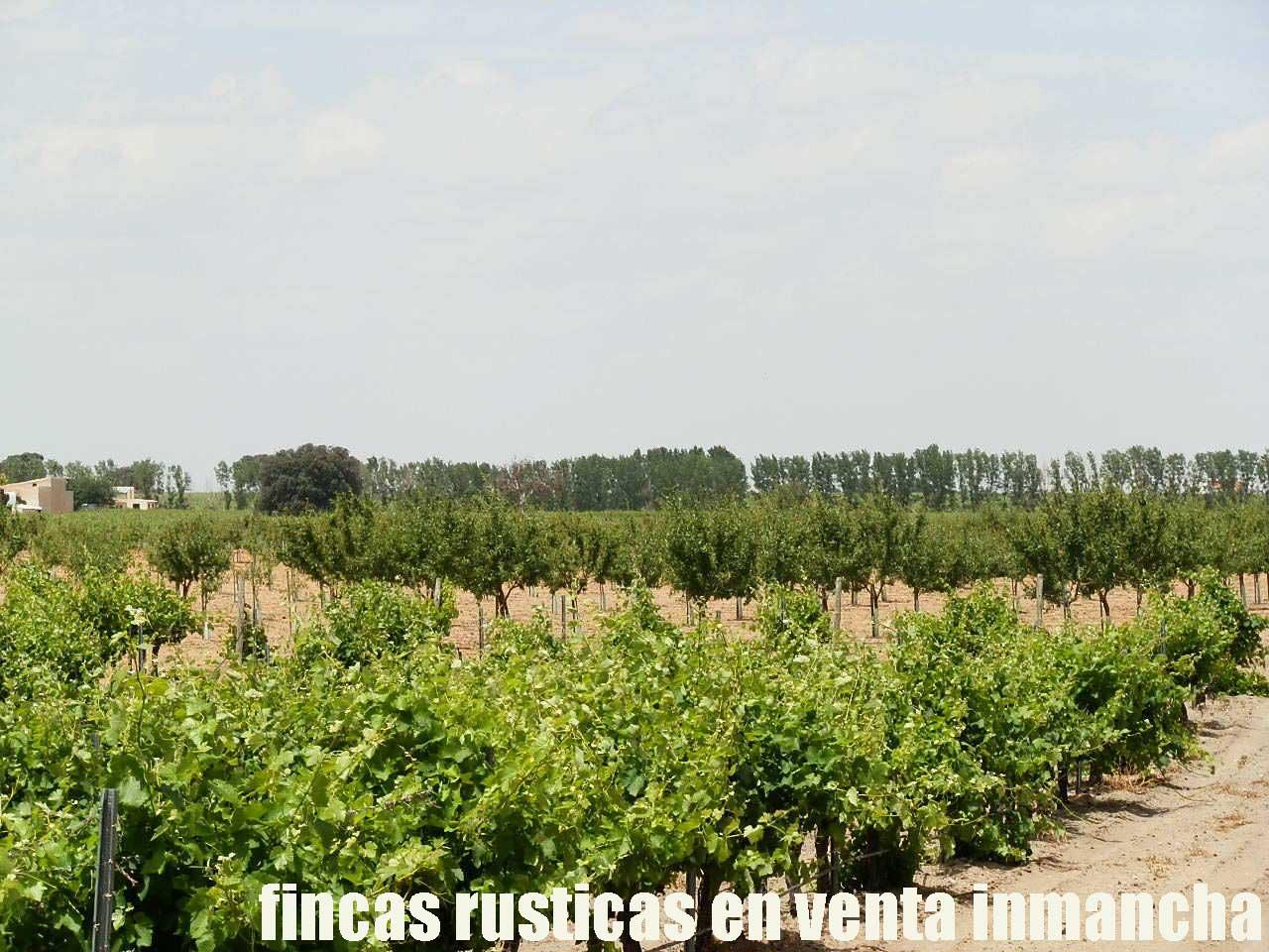 461_fincas-en-venta-027