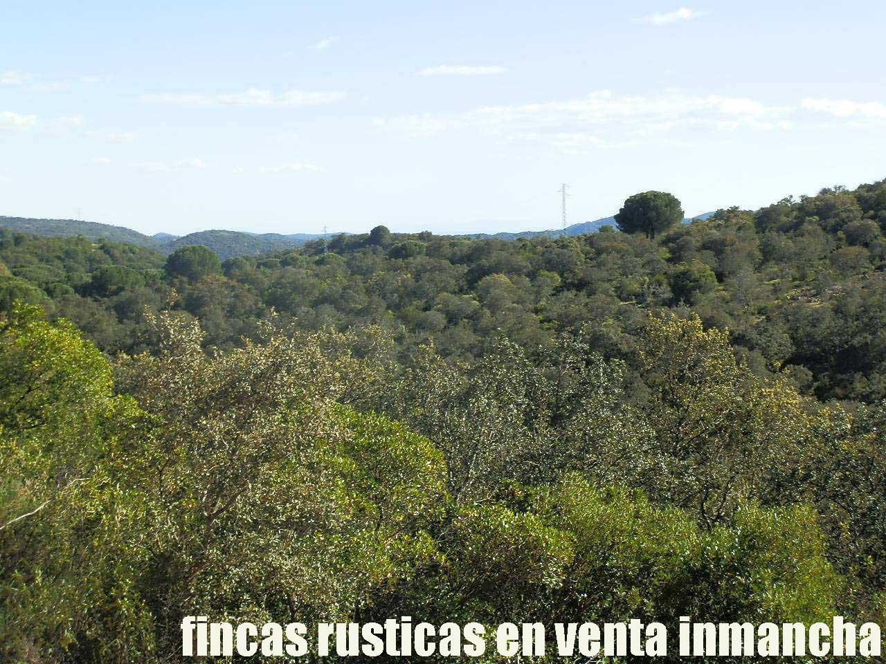 467_fincas-en-venta-002
