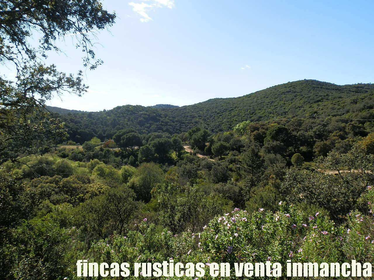 467_fincas-en-venta-011