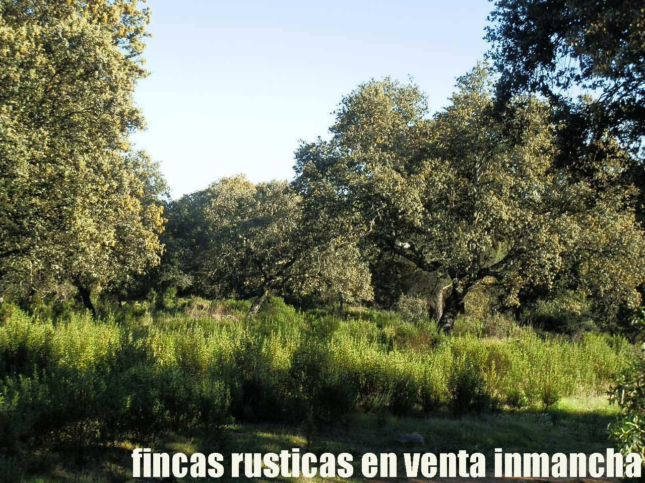 467_fincas-en-venta-052