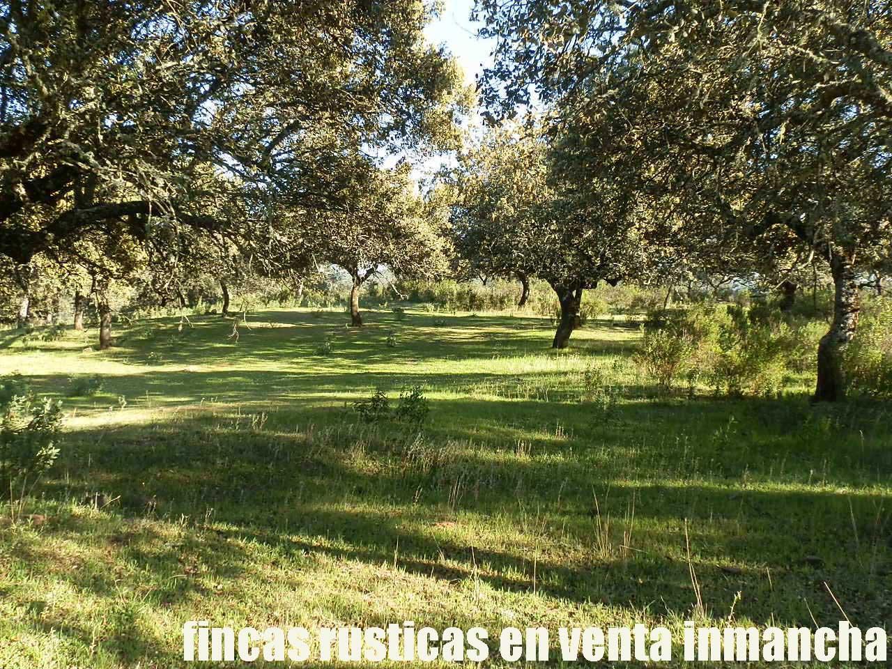 467_fincas-en-venta-063