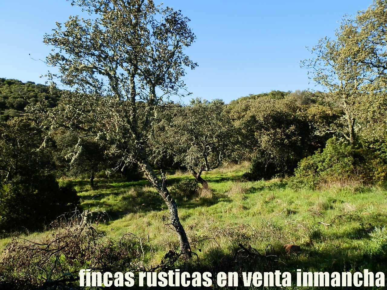 467_fincas-en-venta-067