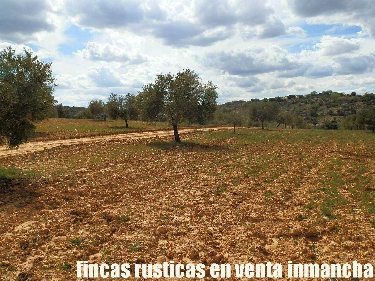 470_fincas-en-venta-082