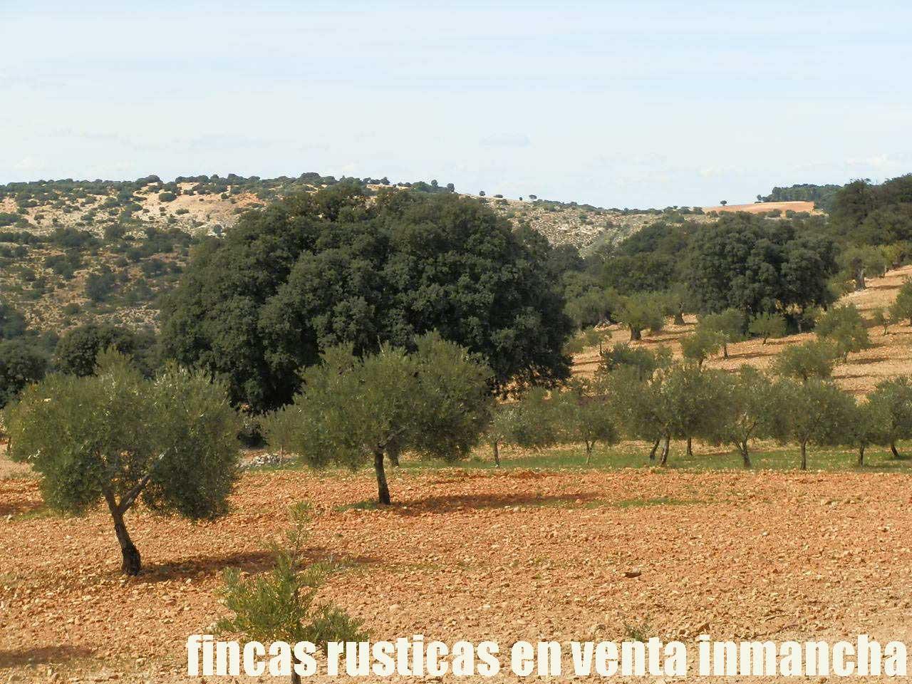 470_fincas-en-venta-088