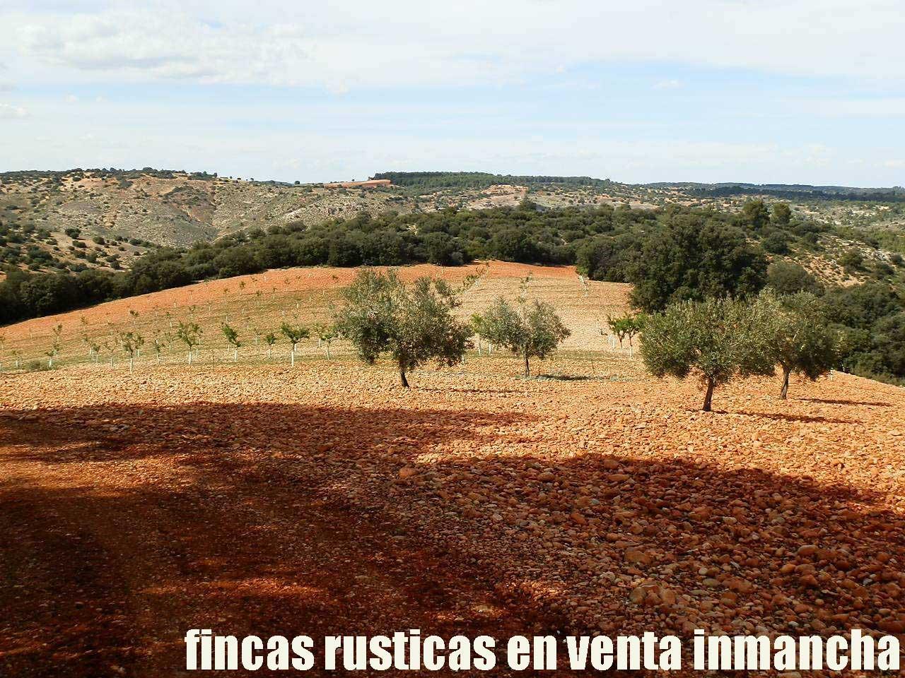 470_fincas-en-venta-095