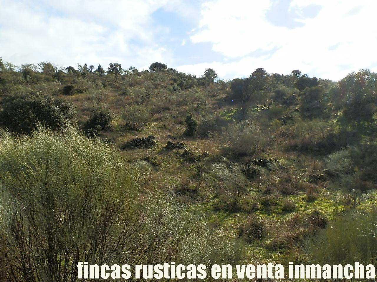 470_fincas-en-venta-39